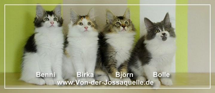 """Elizabeth und Kitten (""""B""""-Wurf)"""