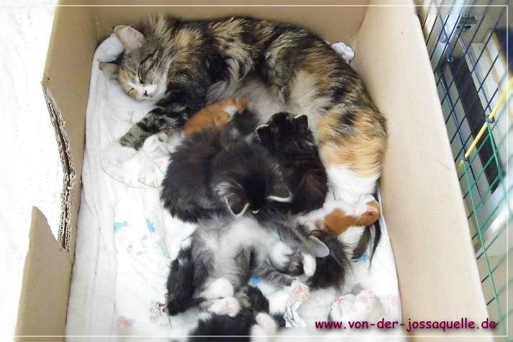 Leonie mit den Kitten